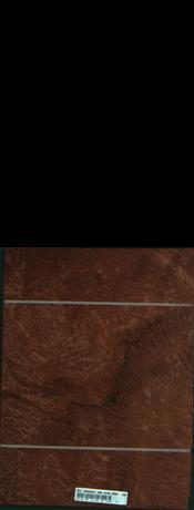 Vavona korenica, 3,8400