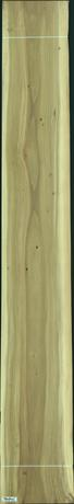 Black Poplar, 34.5600