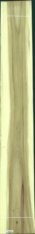 Black Poplar, 35.5200