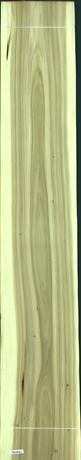 Black Poplar, 42.2400