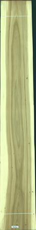 Black Poplar, 36.4800