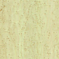 Bird Eye Maple